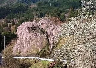 岩太郎20150408.jpg