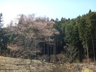 嶽見の桜へ.jpg