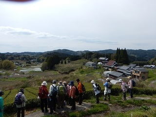 田原を眺める.jpg