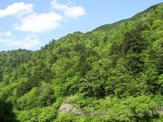 移行帯の森1.JPG