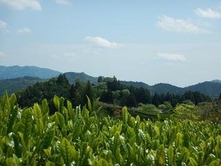 茶畑越の田峯城.jpg