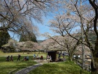薬師の桜.jpg
