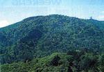 演習林の天然ヒノキ林遠景.jpg