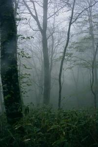 霧の真之俣谷.jpg